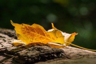 Herbstliche Gedanken zu einem natürlichen Umgang mit Sterben und Tod